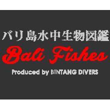 Bali Fishes